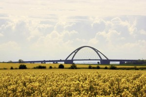 In May, the Fehmarn Sound Bridge is surrounded by fields of blazing yellow.
