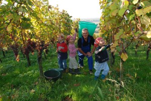In autumn the whole family can help to harvest the grapes