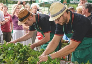 The Saalfeld Hop Picking (Saalfelder Hopfenzupfer), a competition on the last Saturday in August