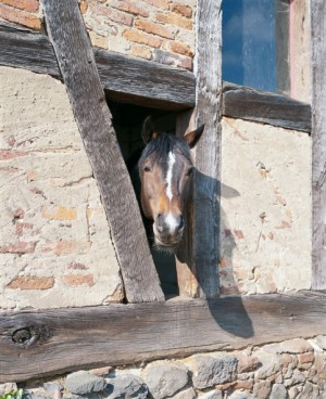 A horse looks out of a half-timbered building