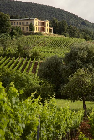 Wine Route - villa Ludwigshöhe and vineyards