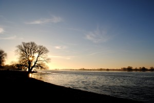 Winter sunrise over the banks of the Elbe in Brandenburg. The finely branching top of a willow can be seen against the light. Isolated cirrus clouds glow in the sky above the wide Elbe river.