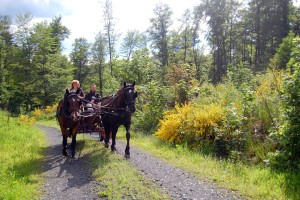 Carriage ride around Hirzenhain