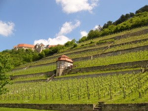 Herzoglicher Weinberg vineyard in Freyburg (Unstrut) with view of Neuenburg Castle