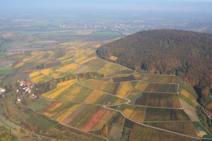 Vineyards on Wilfersberg hill near Pfedelbach in autumn
