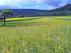 Summer meadows near Sulzbach an der Murr in the Lautertal valley