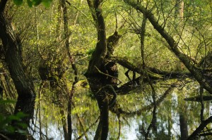 Enchanting tree formation in the Schwalm-Nette Wetland Nature Park
