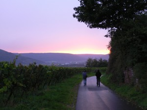 Walkers taking an evening stroll past a vineyard