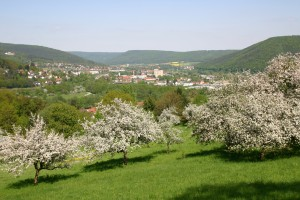 View over fruit trees in blossom with the town of Lohr am Main in the background