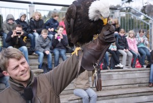 Berlebeck eagle sanctuary