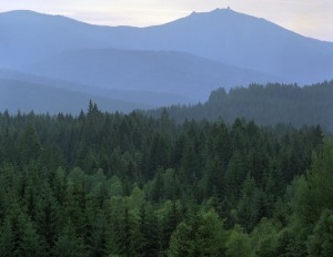 The Bavarian Forest National Park at first light