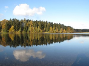 By a lake in a coniferous forest