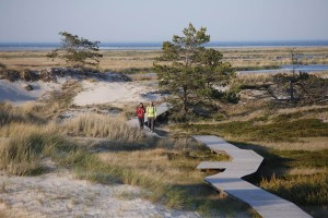 A rewarding wooden path: all routes lead to water on the Darß peninsula