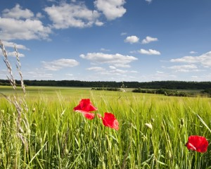 Saarland, summer meadow