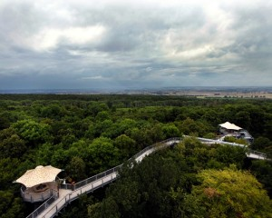 Hainich National Park, treetop walk