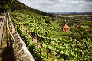 "Vineyard with the ""Zum Heiligen Geist"" church (Church of the Holy Spirit)"
