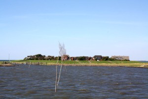Hallig island in the Wadden Sea