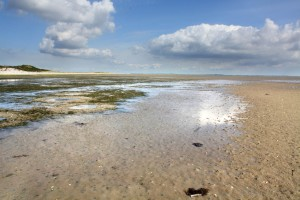 Mudflats at low tide