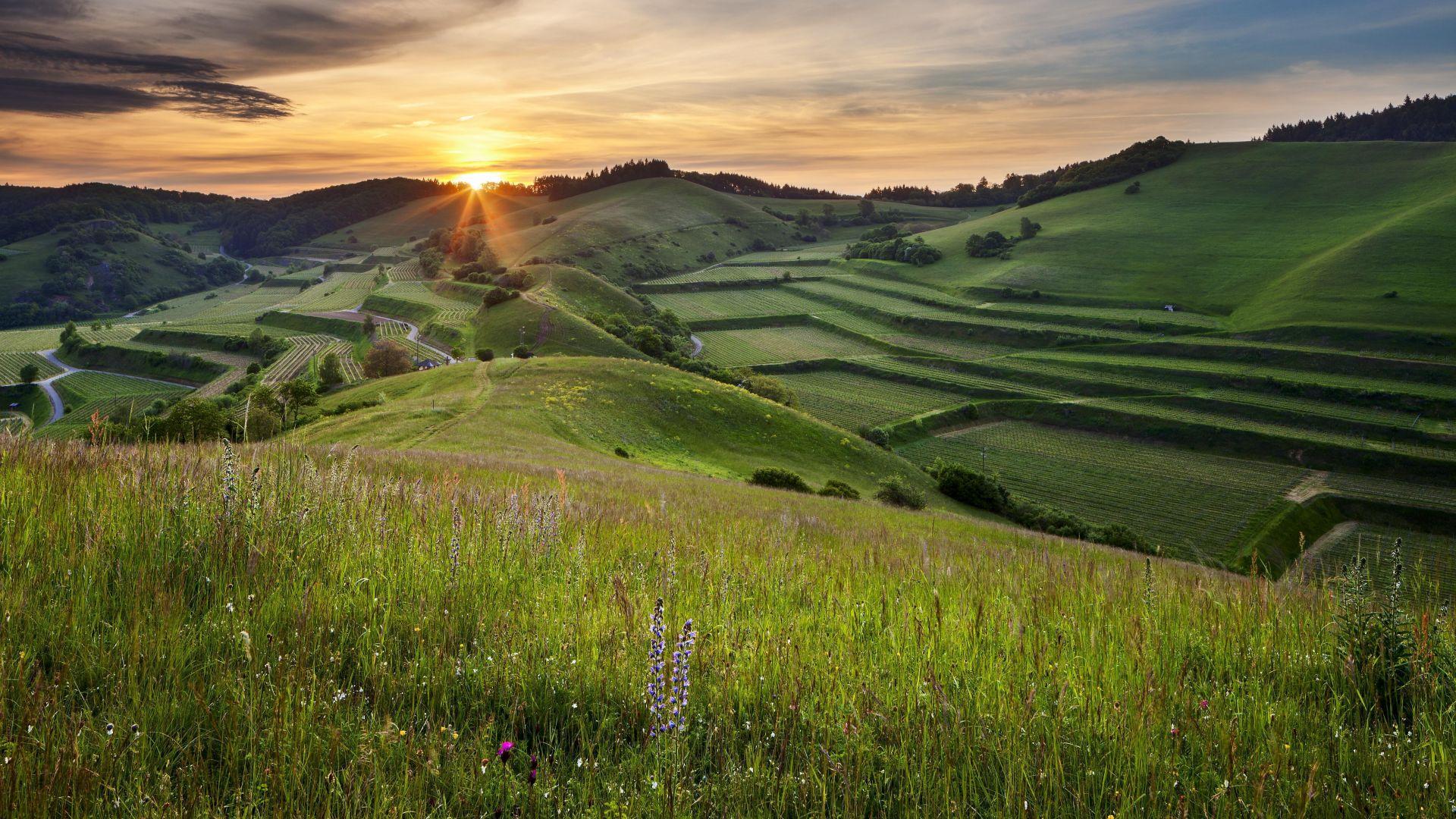 Vogtsburg im Kaiserstuhl: sunrise over hills