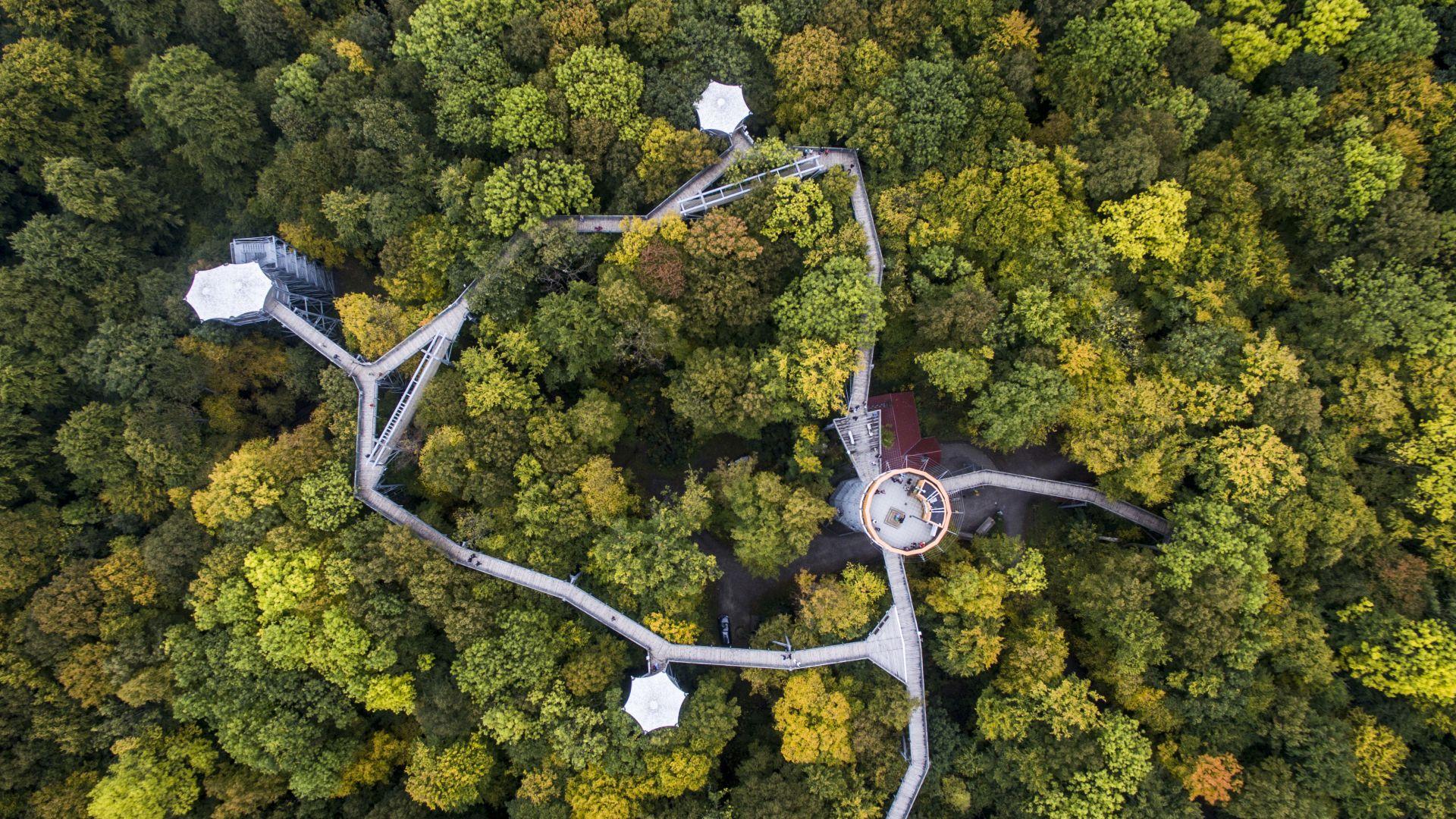 Schönstedt: Treetop path in the national park hainich,, Thüringer Tourismus GmbH