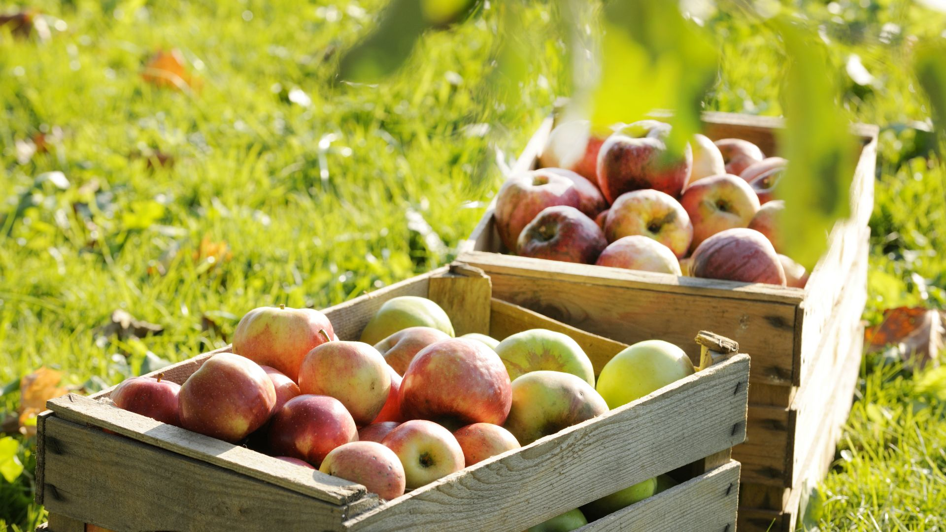 Chiemgau: apple crates on a farm