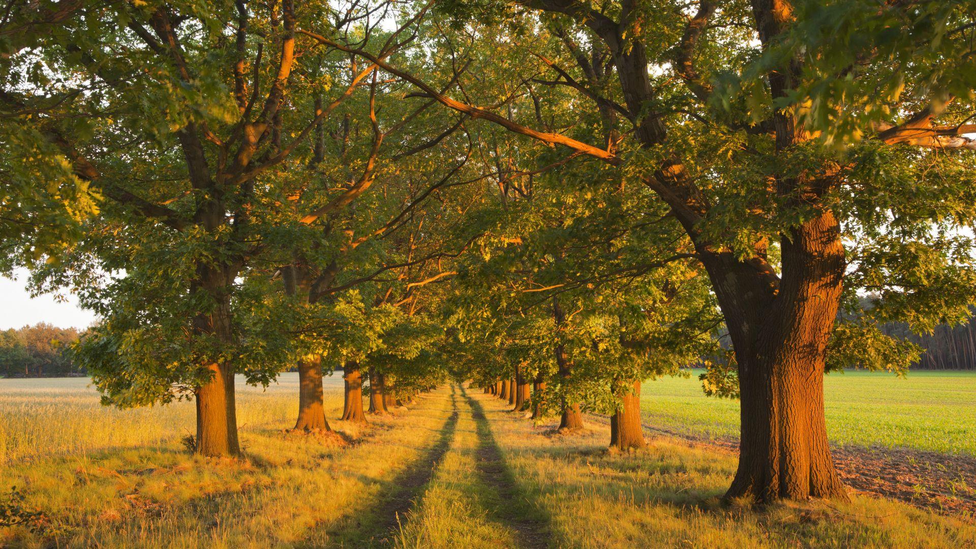 Brandenburg: Red Oak Avenue in Niederlausitz