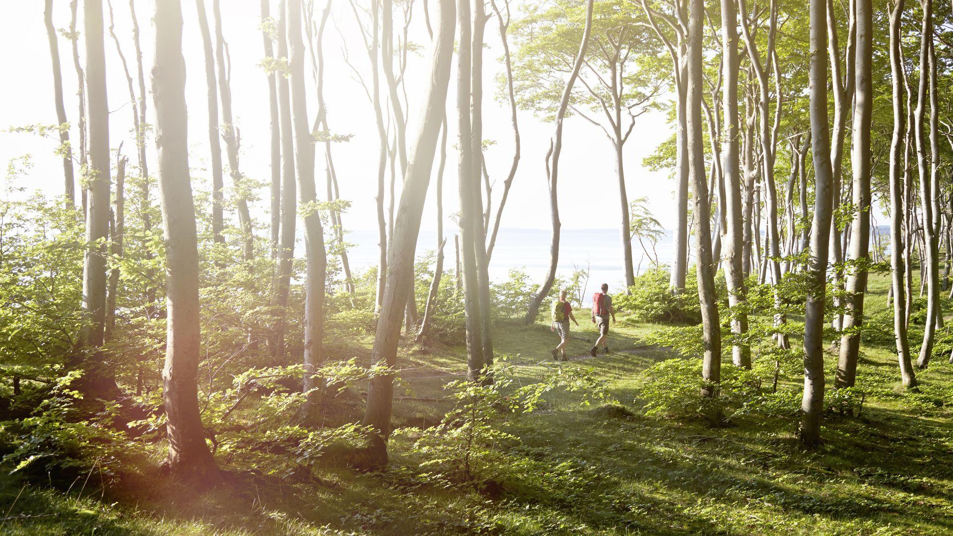 Jasmund National Park: couple hiking